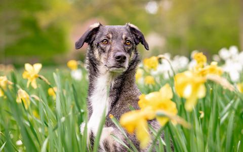 Honden niet meer aan de lijn en huiskatten verboden? Dit zijn de gevolgen van de veranderde dierenwet