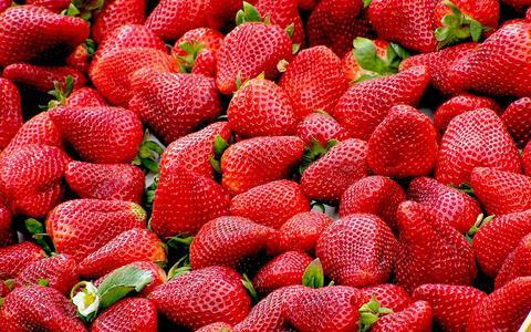 Allerlei variaties en een ongelukje van de natuur: wat je niet wist over aardbeien