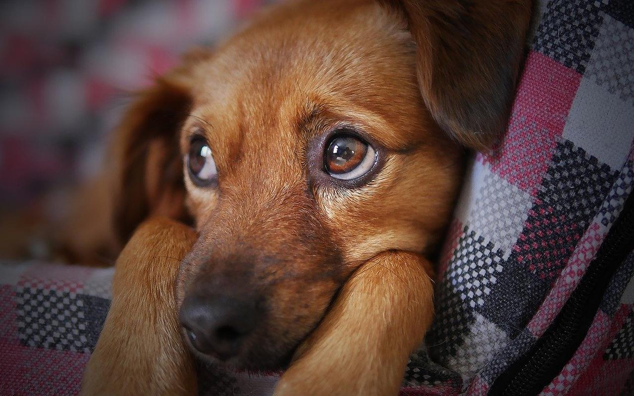 Een puppy.