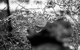 Jaloerse man (35) uit Harlingen vernielt ruiten: werkstraf en schade betalen