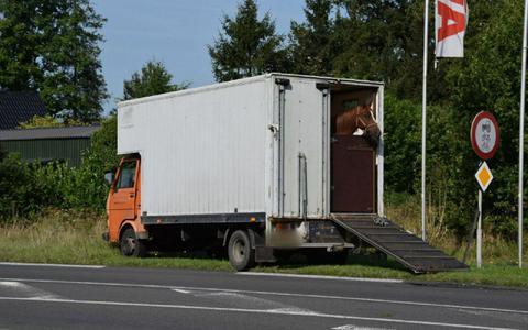 De paarden raakten bij het ongeval niet gewond.