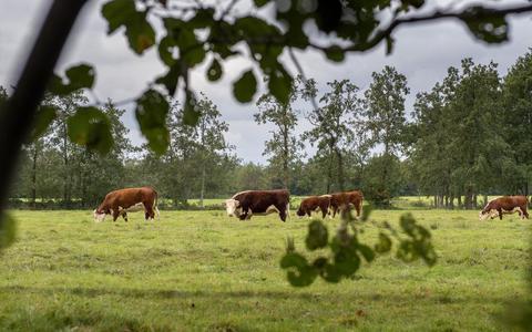 Het coulissenlandschap in de Wâlden.
