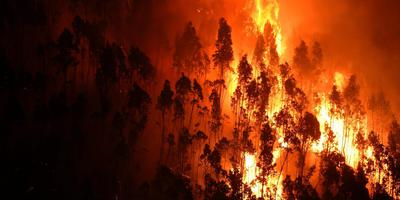 Branden zijn slechts een van de vele bedreigingen voor het bos-ecosysteem. Foto AFP