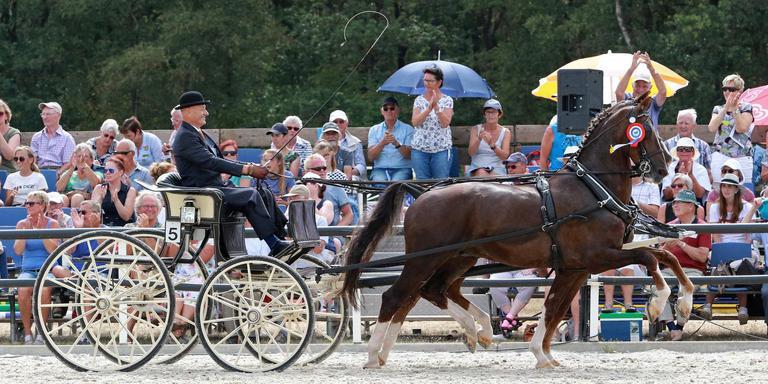 Ule Haarsma werd met zijn Tuigpaardenspan Zavanno en Celebration kampioen bij het CH in Rijs